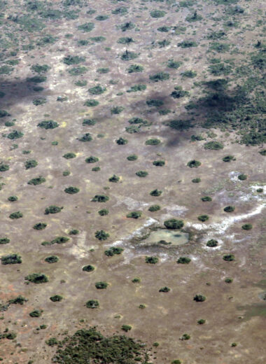 Aerial view of vegetation and termite mound spatial patterning
